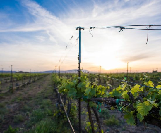 Wine Enthusiast's Washington state cabernet